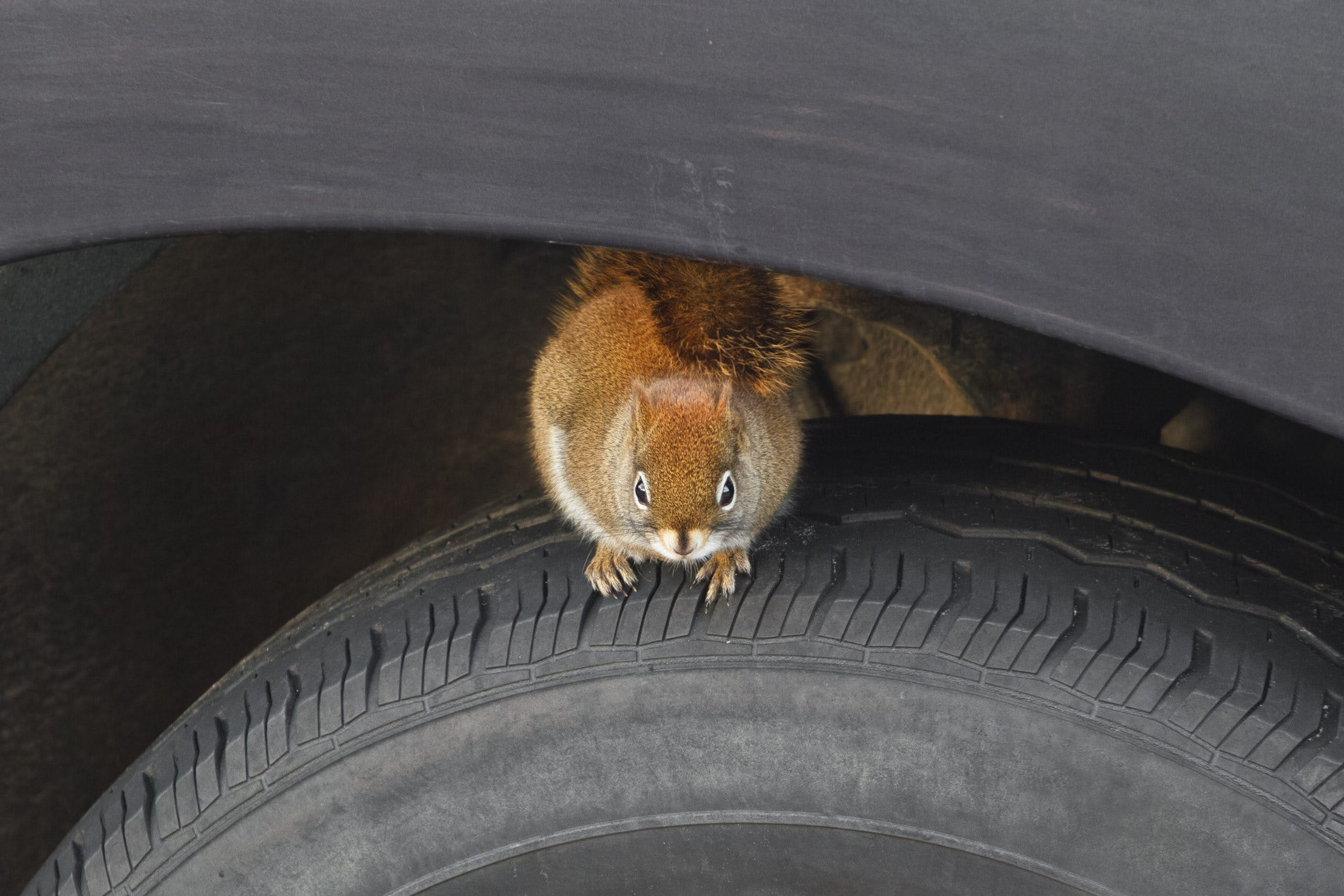 How to Keep Rodents Out of Your Car